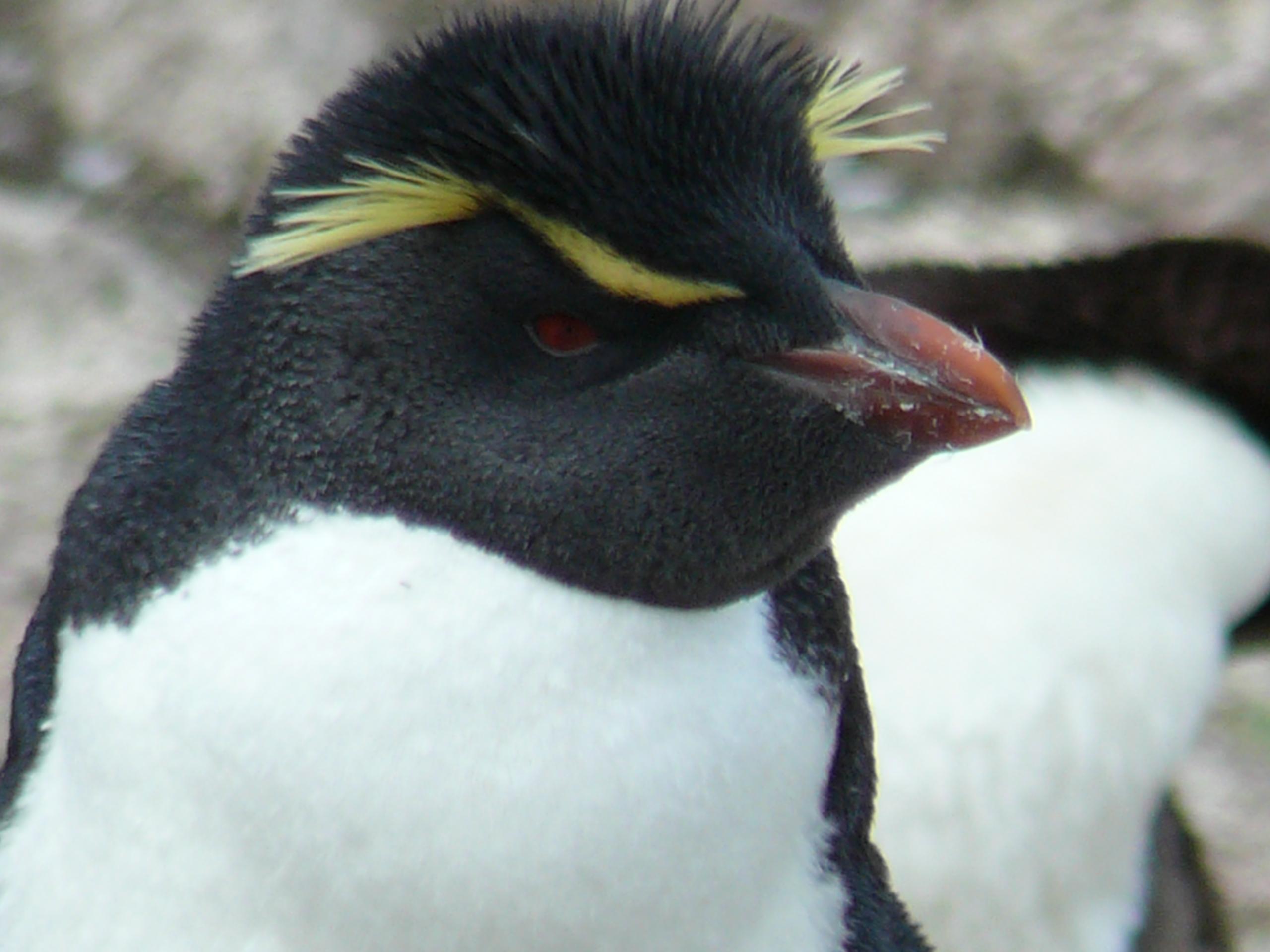 Patagonia Sur y los Pingüinos