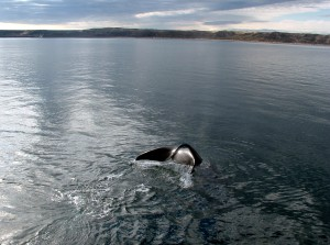 Patagonia marittima