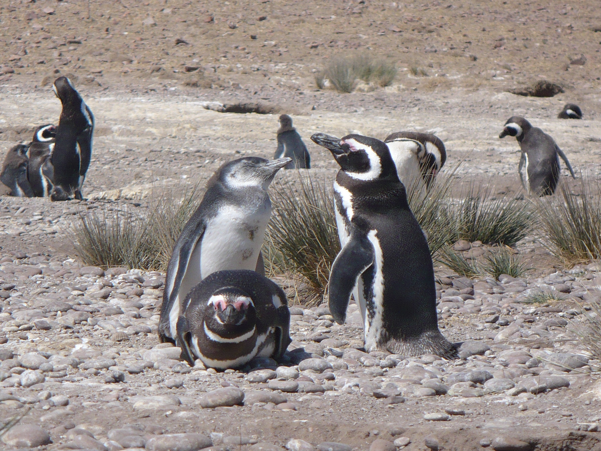 I Pinguini