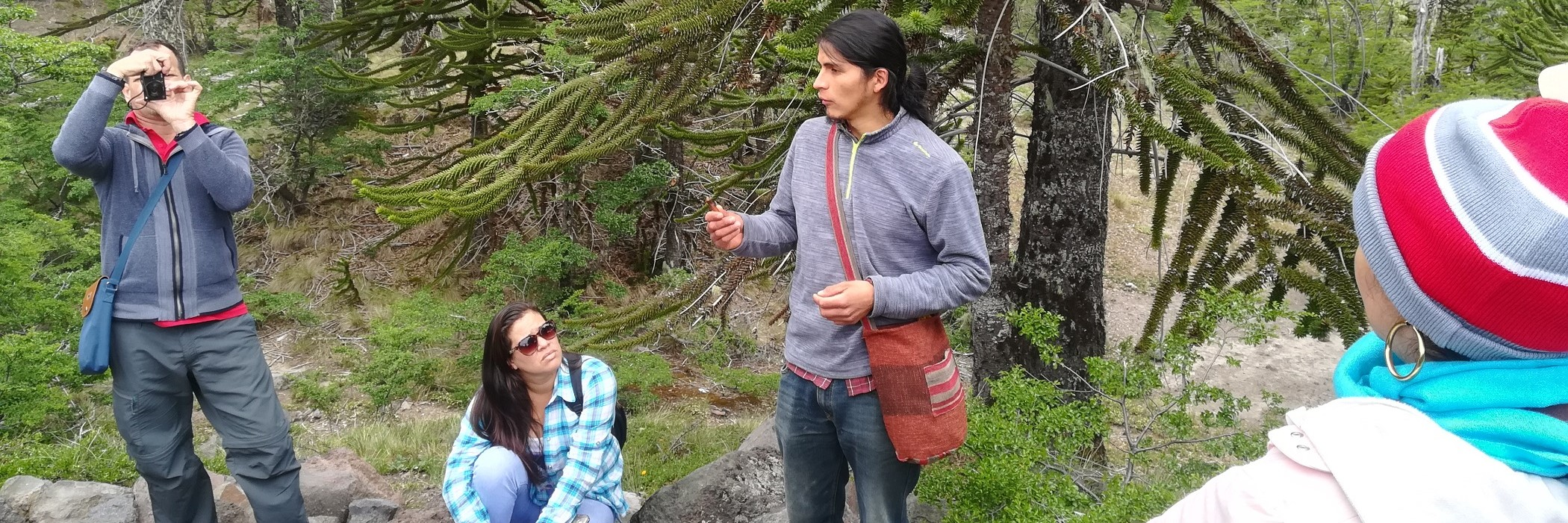 Caminata interpretativa entre araucarias